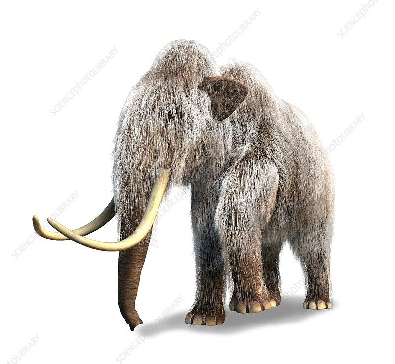 Woolly mammoth, artwork