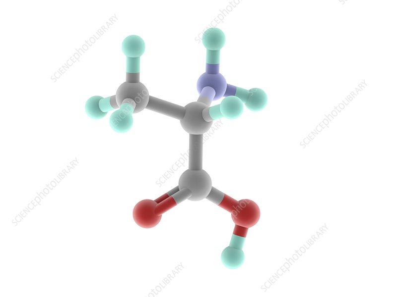 Alanine molecule
