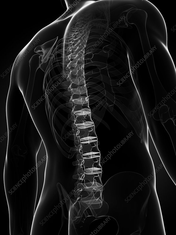 Healthy spine, artwork
