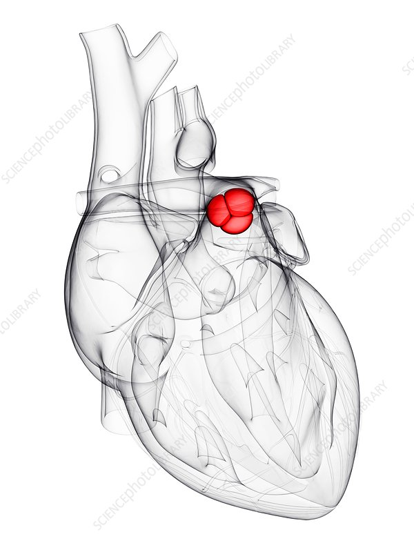 Heart valve, artwork