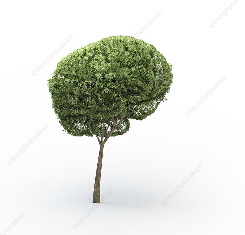 Brain-shaped tree, artwork