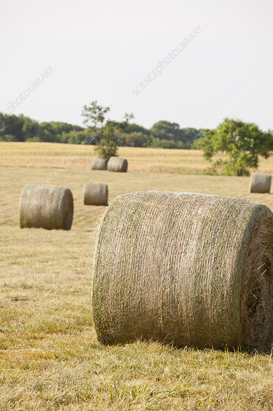 Hay bales in field