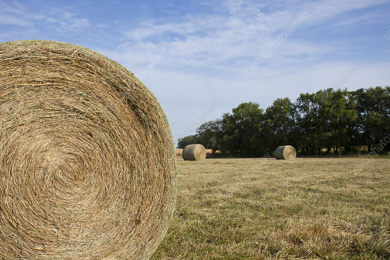 Close up of hay bale in field