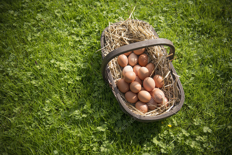 Basket of fresh eggs in grass