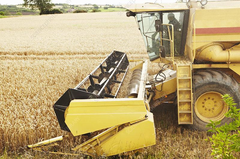 Thresher working in crop field