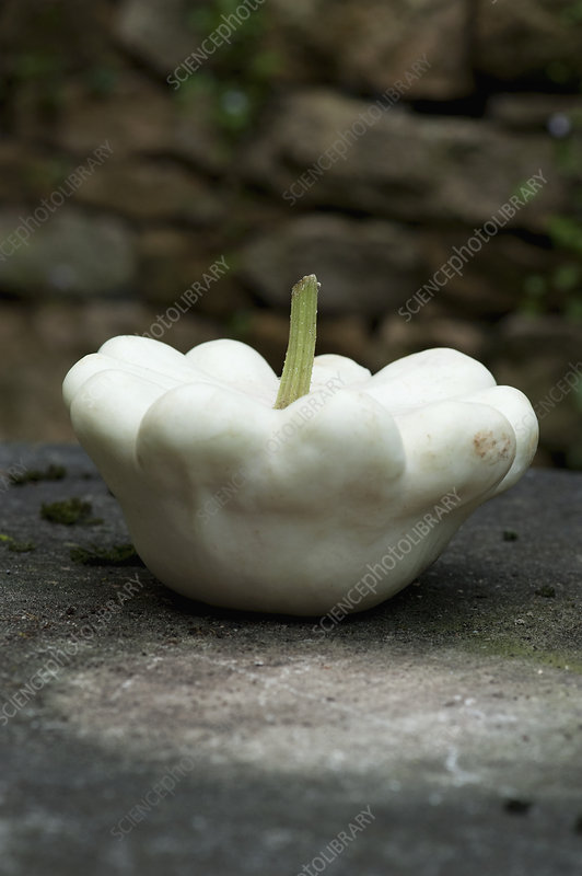 Close up of white gourd on table