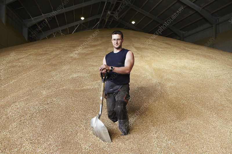 Farmer standing in shed of grain