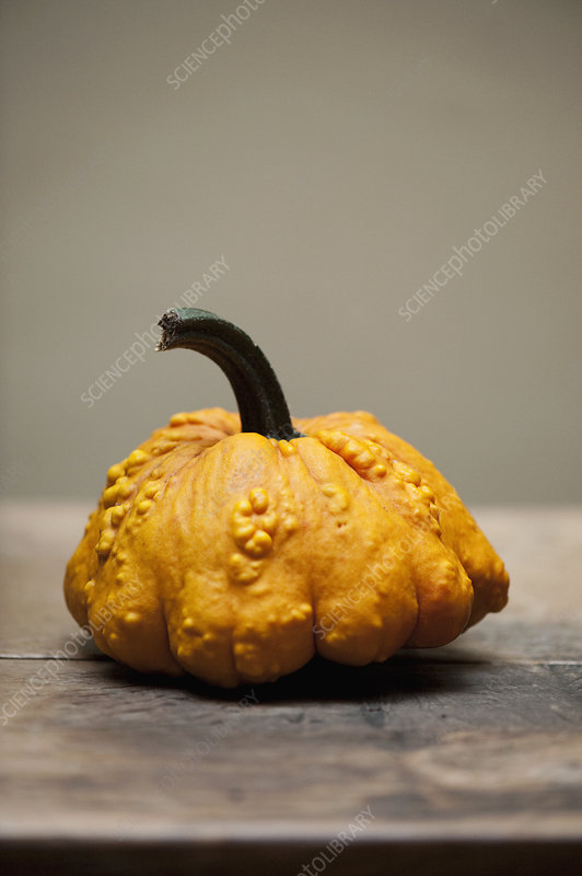 Close up of yellow gourd on table