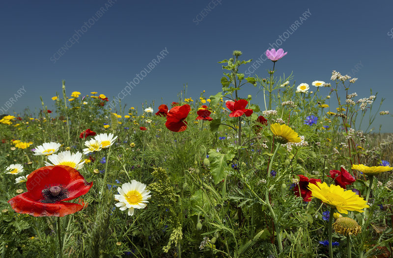 Wildflowers growing in rural field