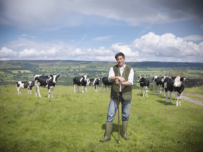 Farmer standing in field with cows