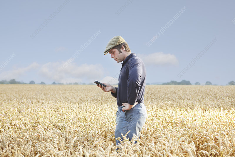 Farmer using cell phone in crop field