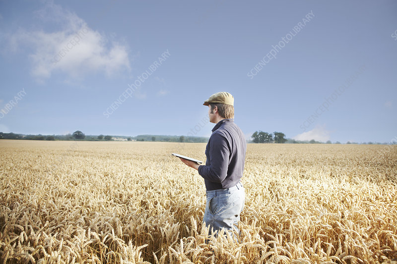 Farmer using tablet computer in field
