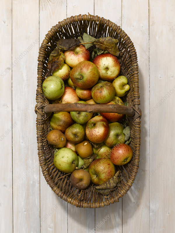 Basket of apples on wooden table
