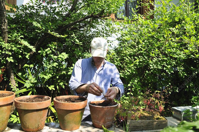 Man potting plants in backyard