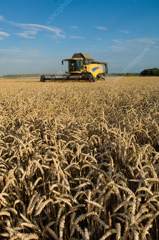 Harvester working in crop field