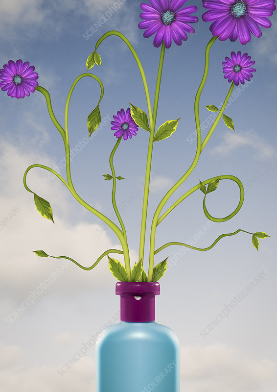 Purple flowers growing out of bottle