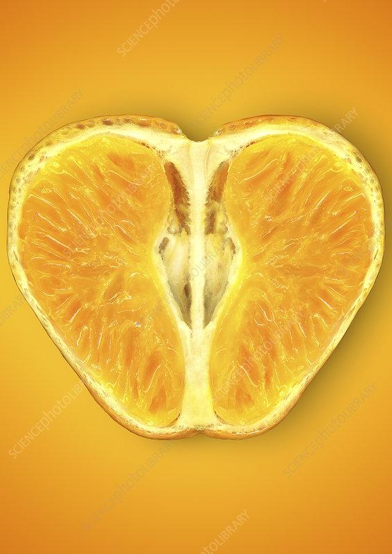 Close up of halved orange