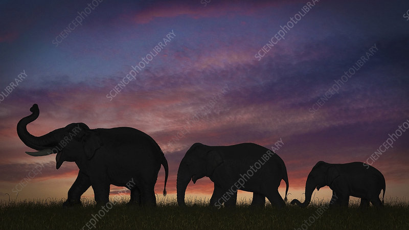 Silhouette of elephants against sky
