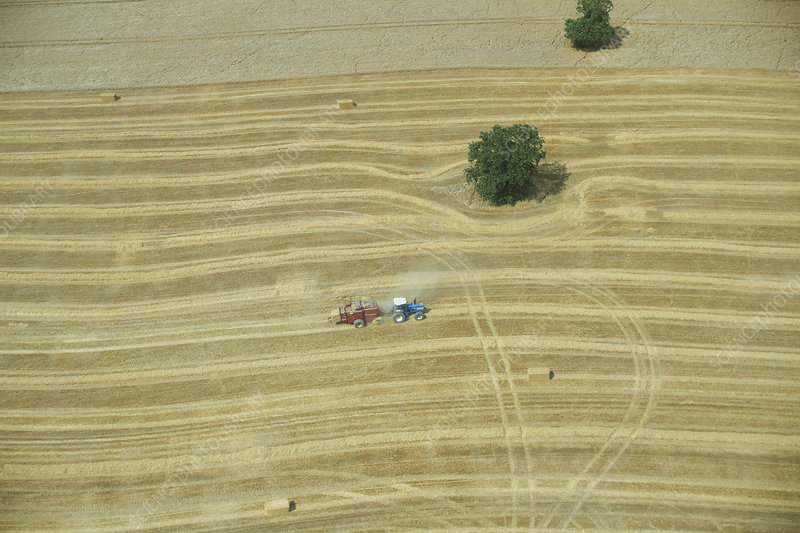 Aerial view of tractor in crop field