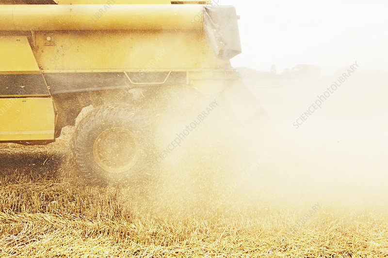 Tractor harvesting grains in crop field