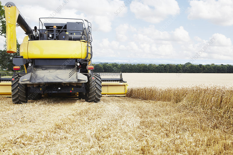 Harvester working in crop field