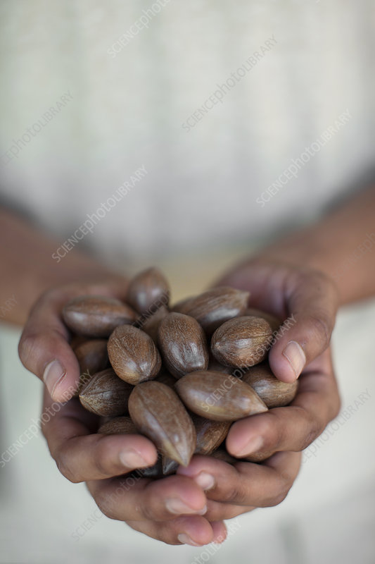 Close up of hands holding nuts