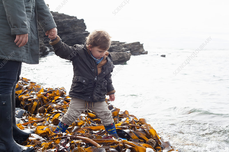 Father and son playing in kelp on beach
