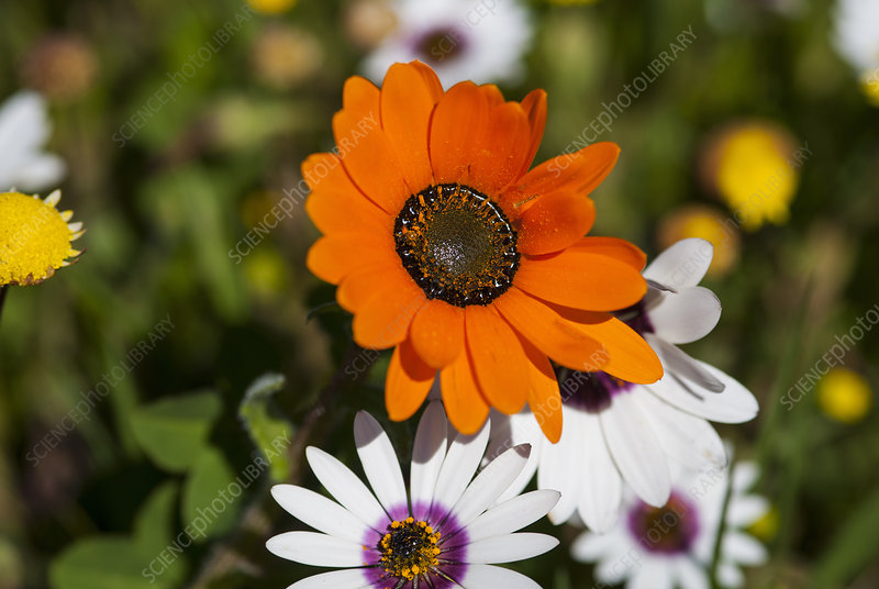 Close up of bright orange flower
