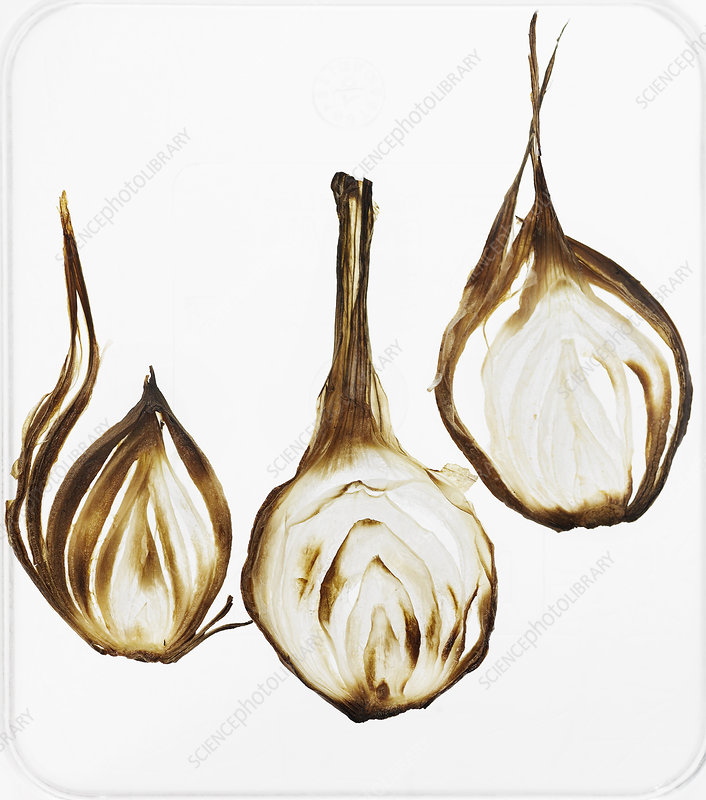Close up of browned onions