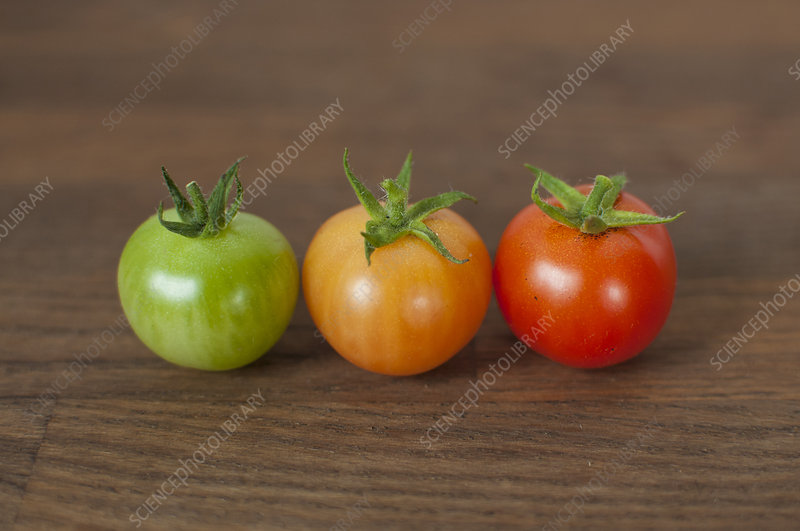 Different colored tomatoes on table