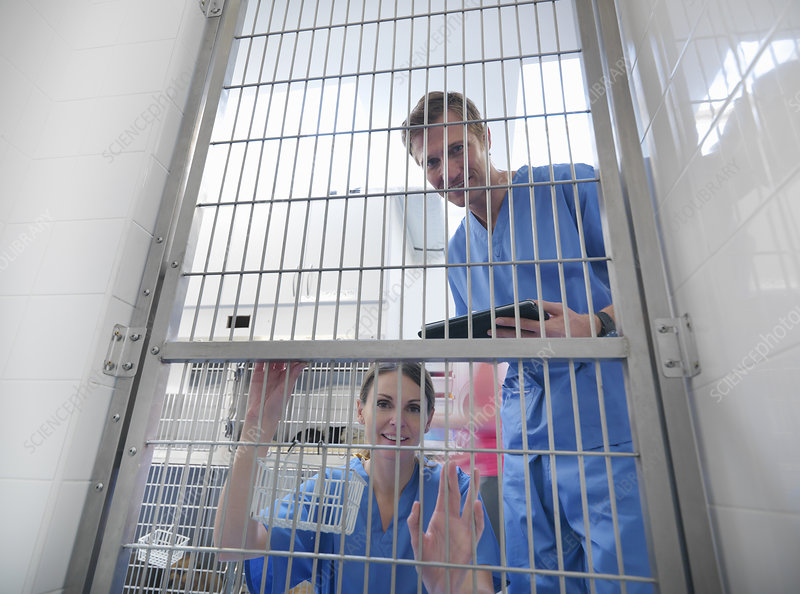 Veterinarians peering through cage door