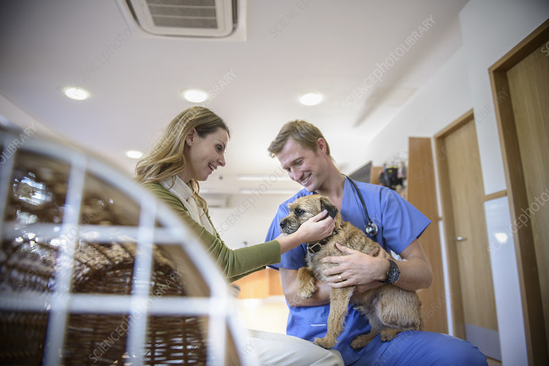 Veterinarian petting dog in lobby