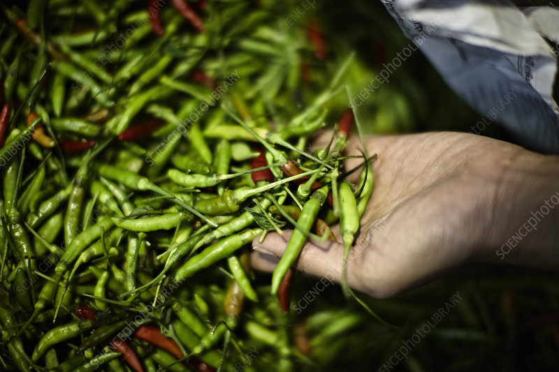 Pile of fresh chilies for sale in market
