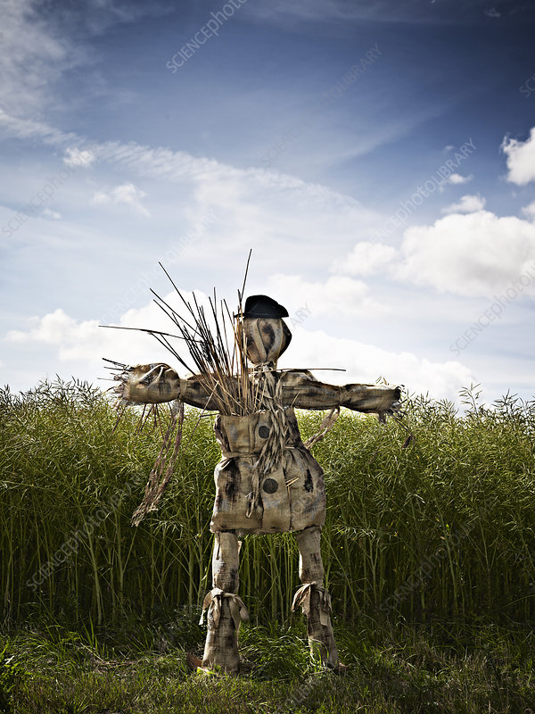 Scarecrow standing in grassy field