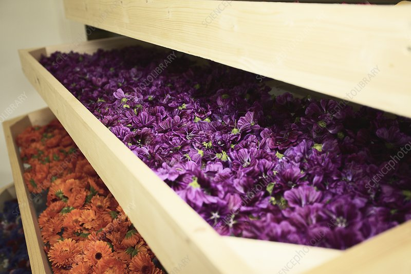 Close up of drawers of flowers