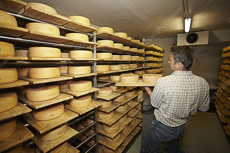 Worker aging wheels of cheese