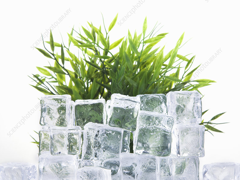 Stacked ice cubes by green plant