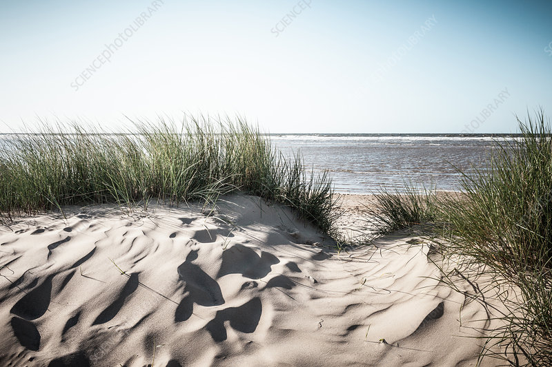 Grassy sand dunes on beach