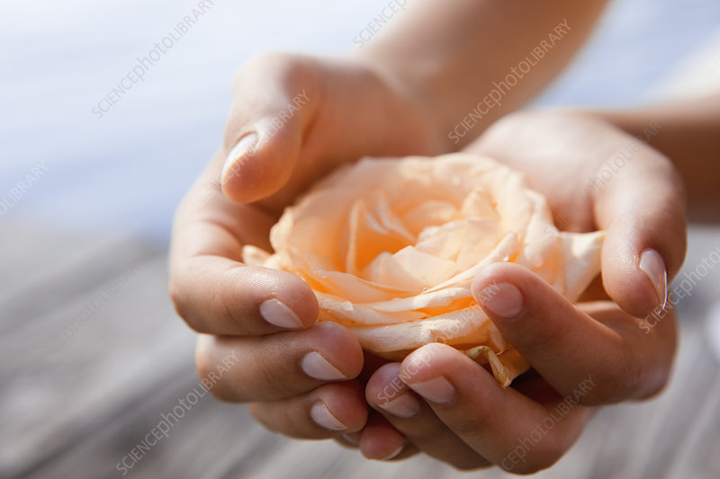 Woman cupping rose in hands