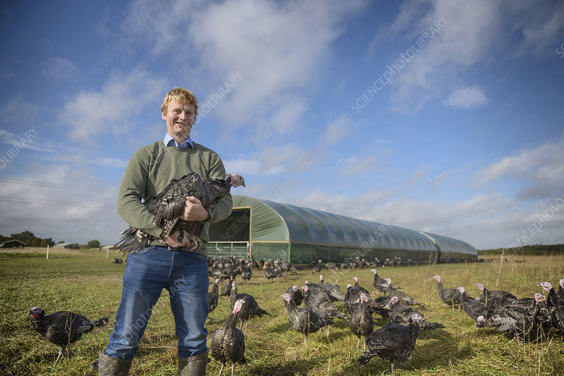 Farmer holding free range turkey
