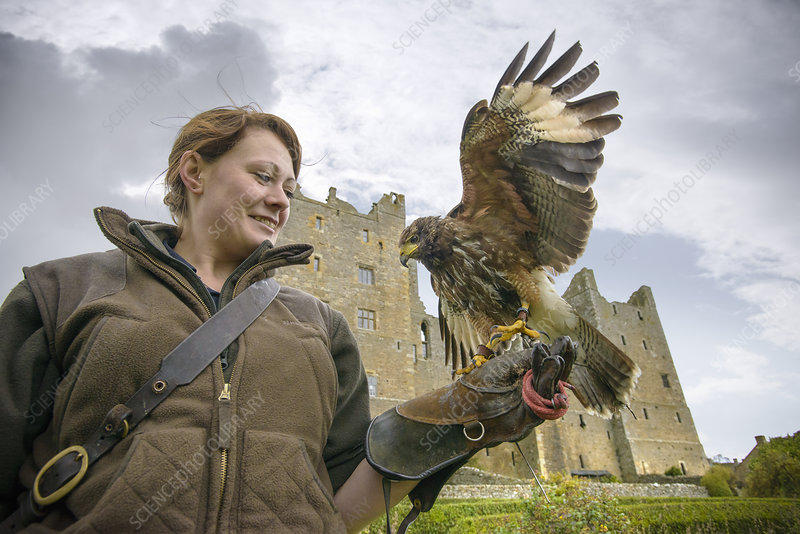 Woman with hawk and gauntlet outdoors