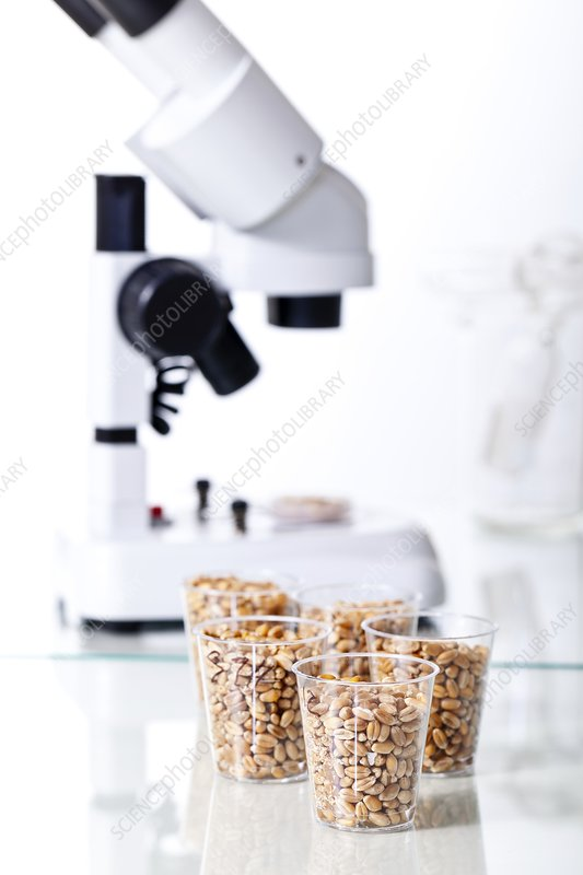 Food research, conceptual image