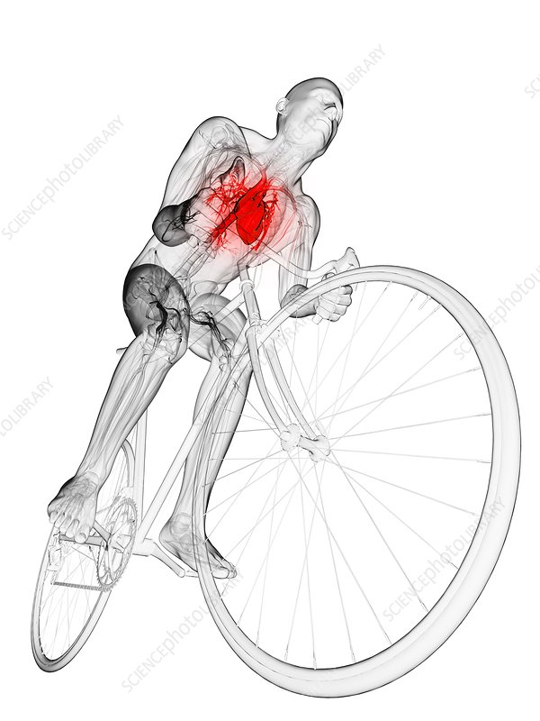 Cyclist, artwork