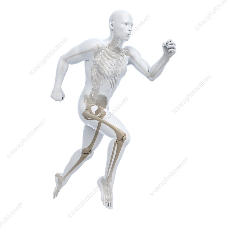 Running skeleton, artwork