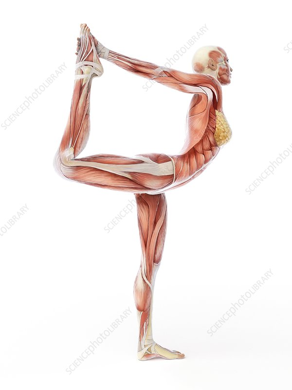 Yoga, artwork