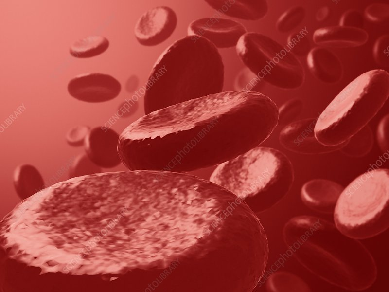 Red blood cells, artwork