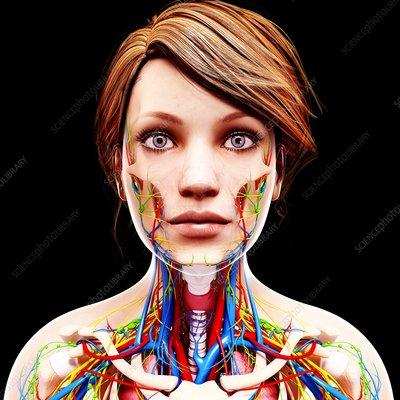 Female anatomy, artwork