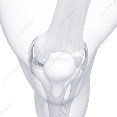 Human leg bones, artwork