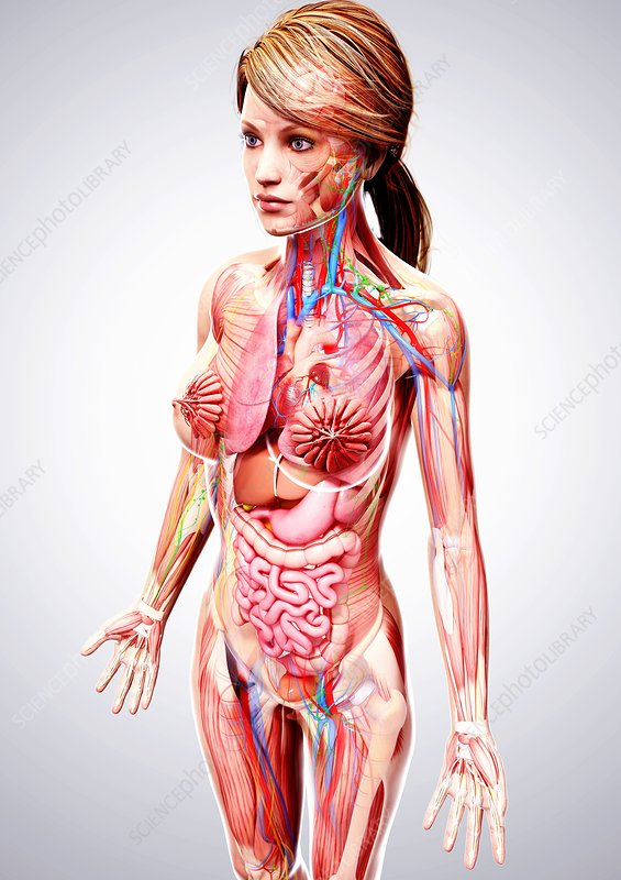 Real female anatomy