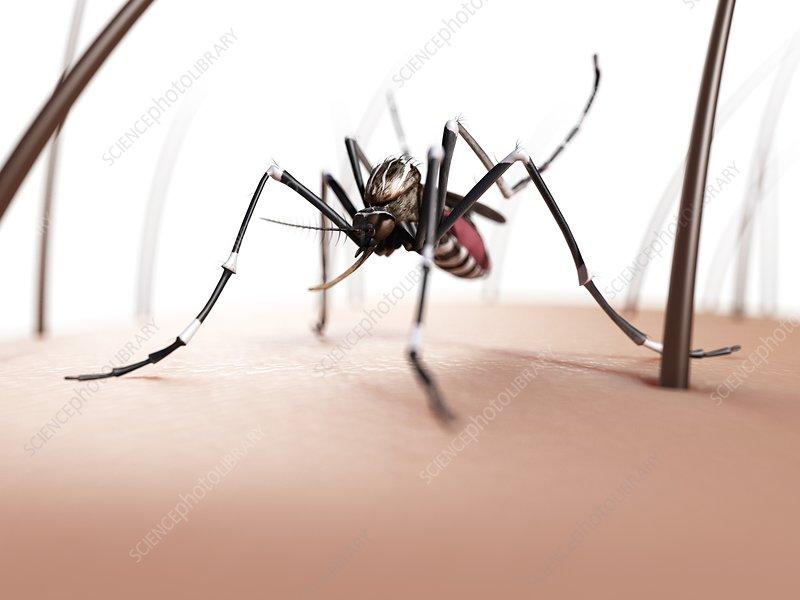 Mosquito on skin, artwork